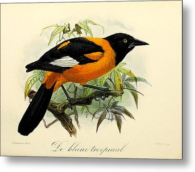 Small Oriole Metal Print by J G Keulemans