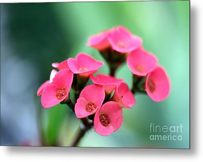 Small Red Flower Metal Print by Henrik Lehnerer