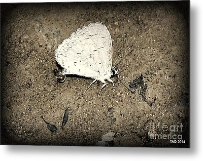 Small Wonder Metal Print by Tami Quigley