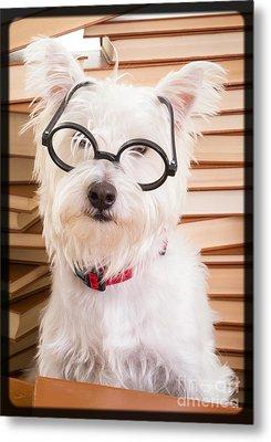 Smart Doggie Metal Print by Edward Fielding