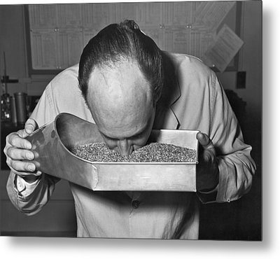 Smelling Grain Inspector Metal Print by Underwood Archives