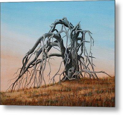 Smiley Canyon Tree Metal Print by J W Kelly