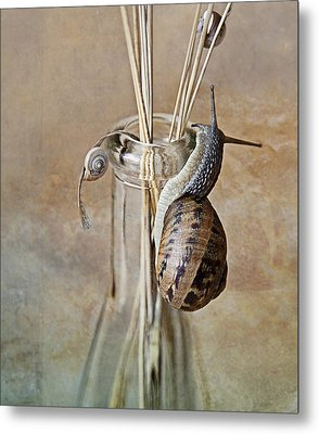 Snails Metal Print by Nailia Schwarz