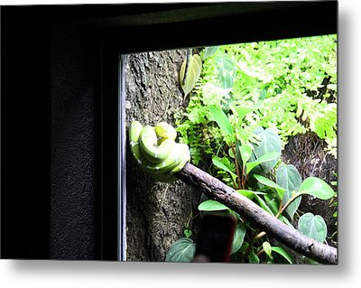 Snake - National Aquarium In Baltimore Md - 12123 Metal Print by DC Photographer