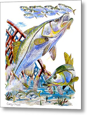 Snook Ambush Metal Print by Carey Chen