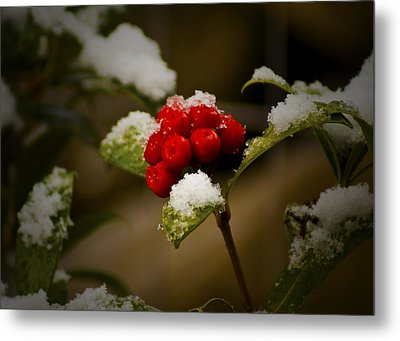 Snow And Berries Metal Print by Ron Roberts