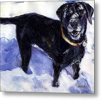 Snow Belle Metal Print by Molly Poole