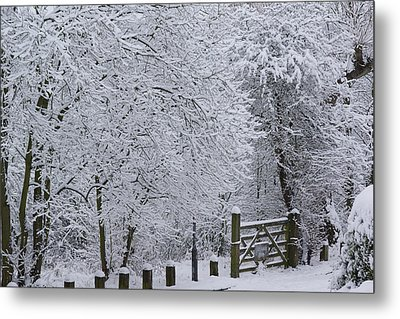 Snow Canopy Metal Print by David Birchall