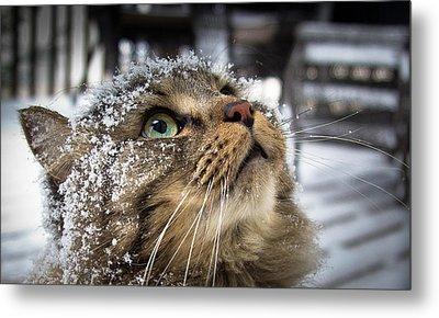 Snow Cat Metal Print by Shane Holsclaw