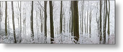 Snow Covered Trees In A Forest, Wotton Metal Print by Panoramic Images