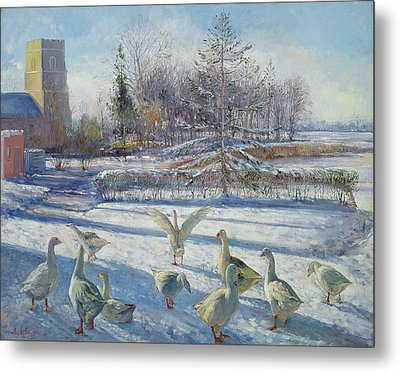 Snow Geese, Winter Morning Metal Print by Timothy Easton