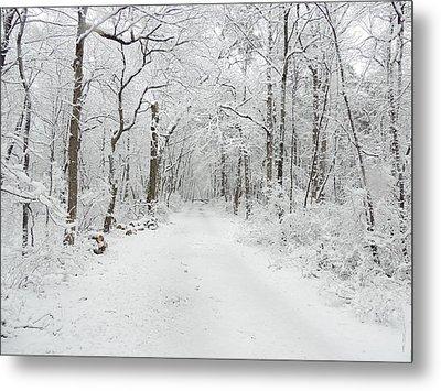 Snow In The Park Metal Print by Raymond Salani III