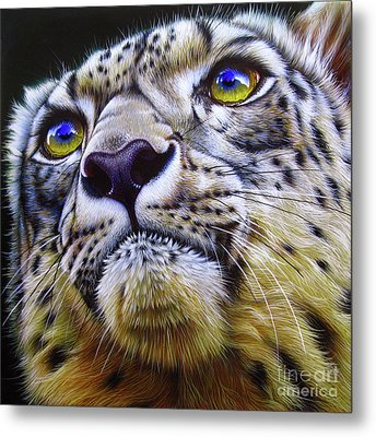 Snow Leopard Metal Print by Jurek Zamoyski