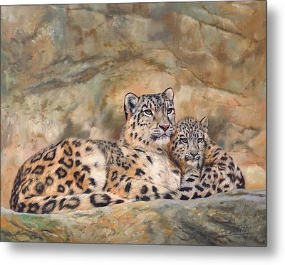 Snow Leopards Metal Print by David Stribbling
