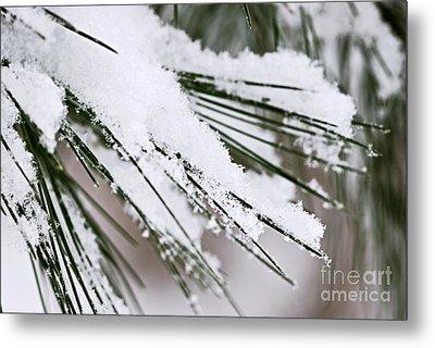 Snow On Pine Needles Metal Print by Elena Elisseeva