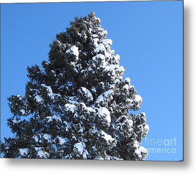 Snow On The Pine Metal Print by Donna Cavender