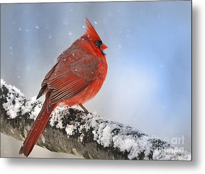 Snowing On Red Cardinal Metal Print by Nava  Thompson