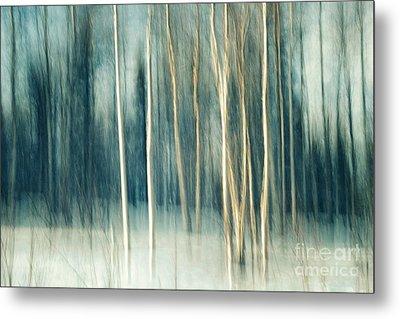 Snowy Birch Grove Metal Print by Priska Wettstein