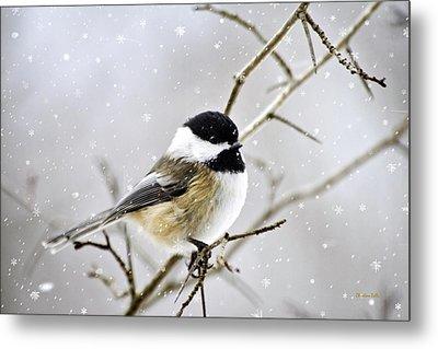 Snowy Chickadee Bird Metal Print by Christina Rollo