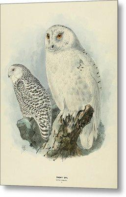 Snowy Owl 2 Metal Print by J G Keulemans
