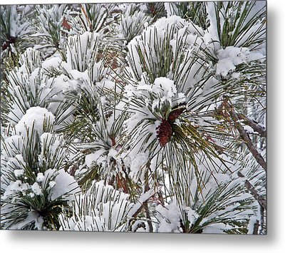 Snowy Pine Needles Metal Print by Aimee L Maher Photography and Art Visit ALMGallerydotcom