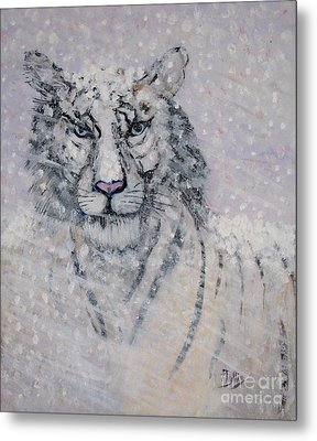 Snowy White Tiger Or Chairman Of The Board Metal Print by Phyllis Kaltenbach