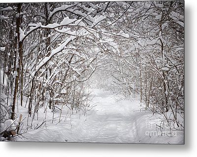 Snowy Winter Path In Forest Metal Print by Elena Elisseeva