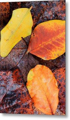 So Cal Autumn Metal Print by Heidi Smith