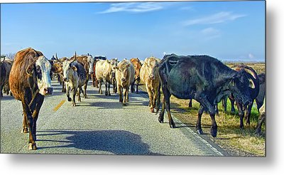 So This Is What Farm To Market Road Means - Panoramic Metal Print by Gary Holmes