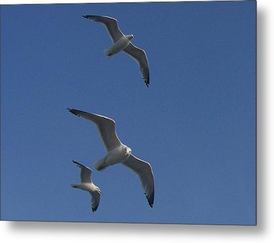 Soaring Seagulls Metal Print by Noreen HaCohen