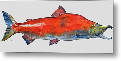 Sockeye Salmon Metal Print by Juan  Bosco
