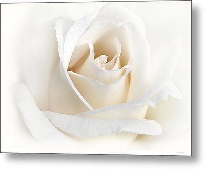 Soft Ivory Rose Flower Metal Print by Jennie Marie Schell