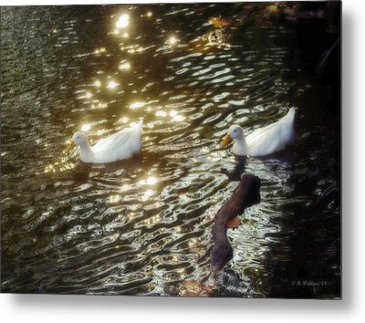 Soft White Metal Print by Brian Wallace