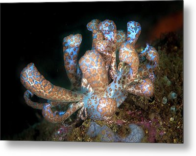 Solar-powered Nudibranch Metal Print by Ethan Daniels