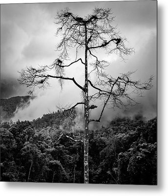 Solitary Tree Metal Print by Dave Bowman