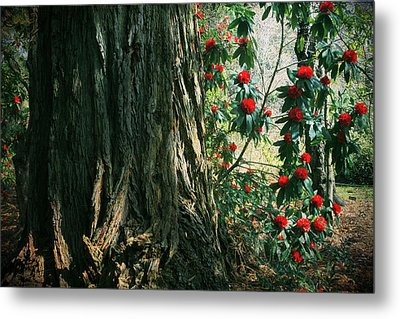 Sometimes Life Is Sweet Metal Print by Laurie Search