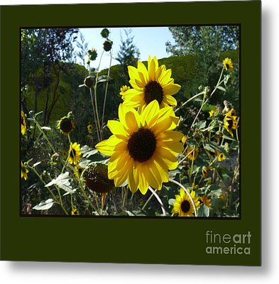 Song Of The Sunflower Metal Print by Jacquelyn Roberts