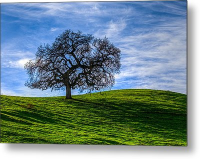 Sonoma Tree Metal Print by Chris Austin