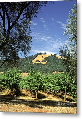 Sonoma Valley Vineyard Metal Print by Craig Lovell
