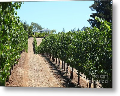 Sonoma Vineyards In The Sonoma California Wine Country 5d24507 Metal Print by Wingsdomain Art and Photography