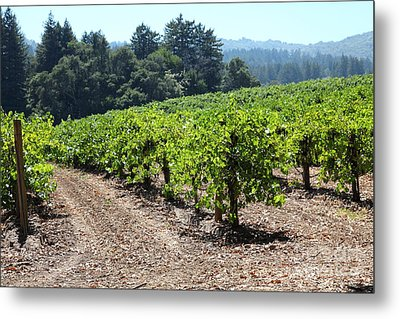 Sonoma Vineyards In The Sonoma California Wine Country 5d24512 Metal Print by Wingsdomain Art and Photography