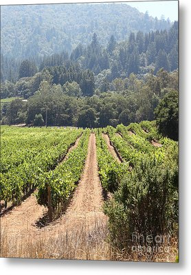 Sonoma Vineyards In The Sonoma California Wine Country 5d24515 Vertical Metal Print by Wingsdomain Art and Photography