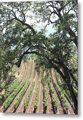 Sonoma Vineyards In The Sonoma California Wine Country 5d24619 Vertical Metal Print by Wingsdomain Art and Photography