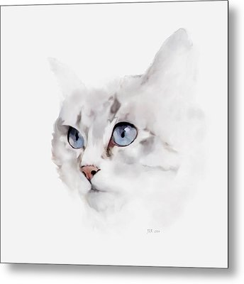Sonsy - Silver Grey Cat Metal Print by Bamalam  Photography