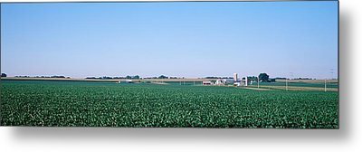 Soybean Field Ogle Co Il Usa Metal Print by Panoramic Images
