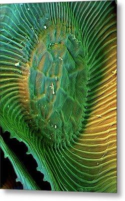Spanish Moss Leaf Metal Print by Stefan Diller