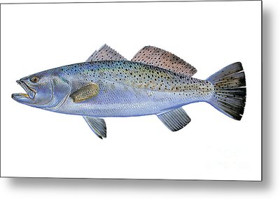Speckled Trout Metal Print by Carey Chen