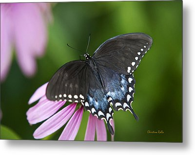 Spice Of Life Butterfly Metal Print by Christina Rollo