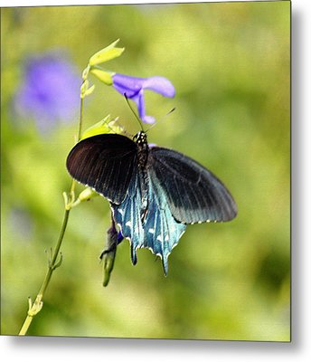 Spicebush Swallowtail Butterfly In Pastel Metal Print by Suzanne Gaff