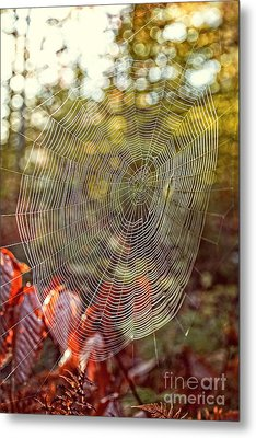 Spider Web Metal Print by Edward Fielding